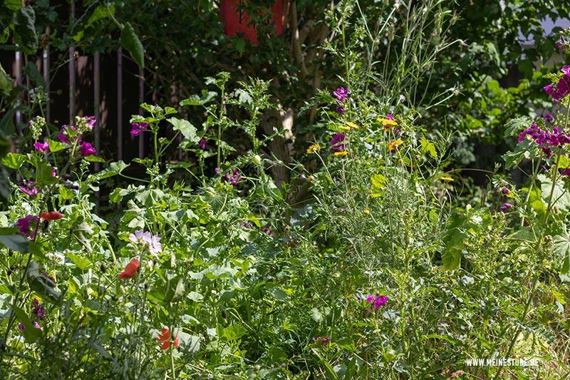 Schmetterlingsgarten mit Wildblumen, meinestube-diy