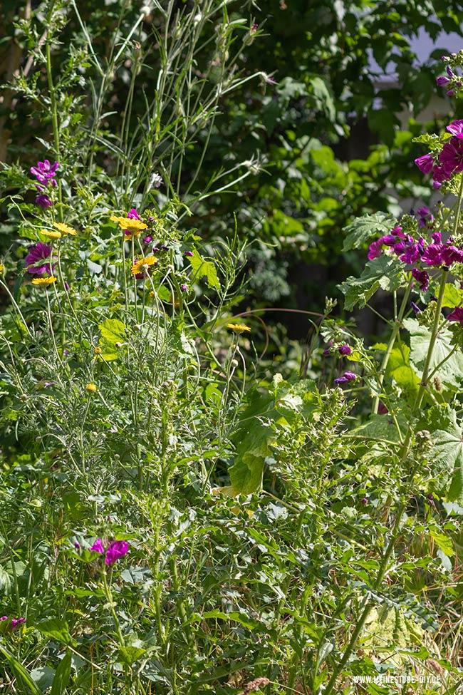 Schmetterlingsgarten mit Kindern angelegt, meinestube