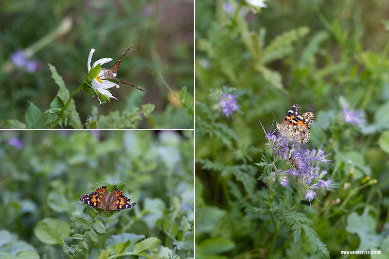 Schmetterlinge auf Blumen, meinestube-diy