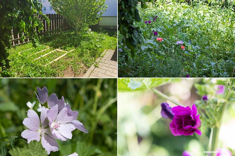 Wildblumen im Garten, meinestube-diy